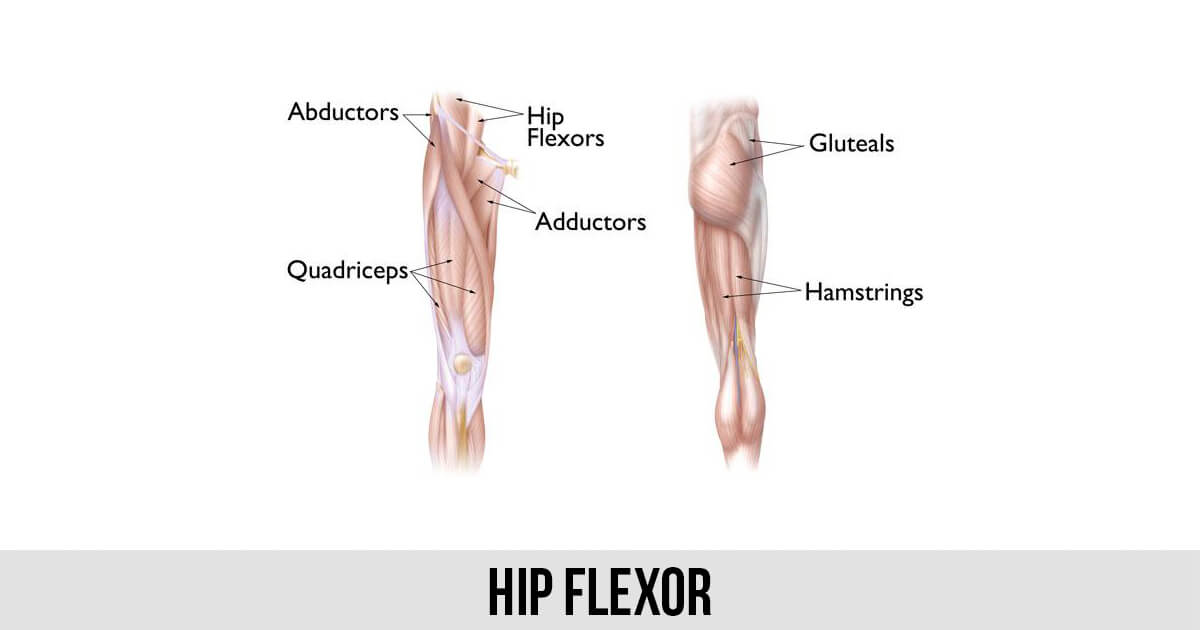 Hip Flexor