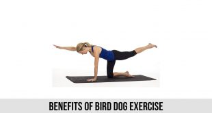 Benefits of bird dog exercise