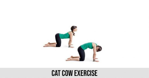 Cat Cow Exercise