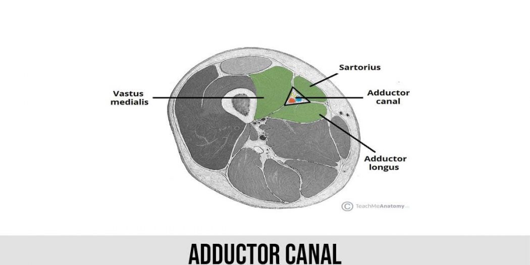 Adductor Canal