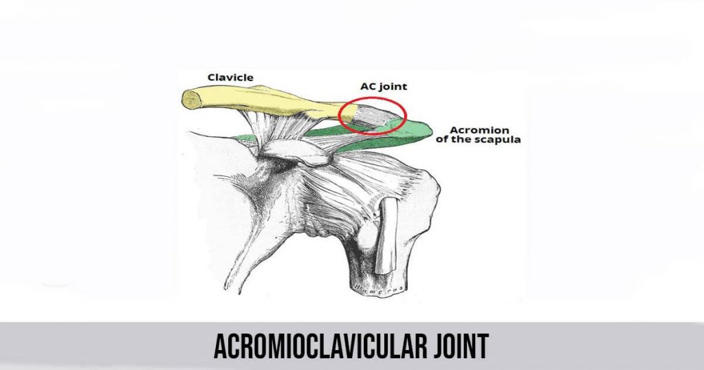 Acromioclavicular Joint - Separation, Anatomy, Causes and Symptoms