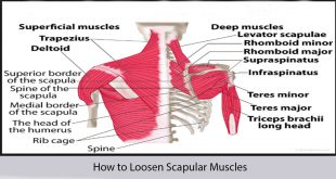 How to Loosen Scapular Muscles