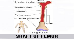 shaft of femur