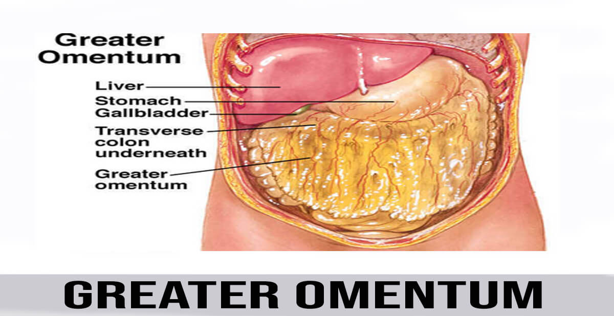 greater omentum