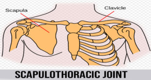 scapulothoracic joint