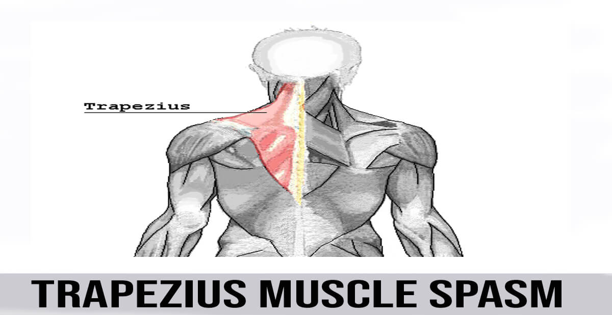 Trapezius Muscle Spasm World Wide Lifestyles