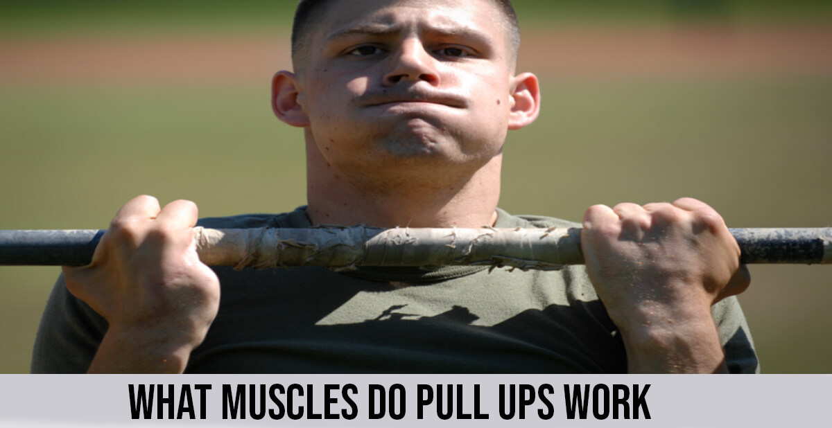 what muscles do pull ups work (1)