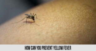 How Can You Prevent Yellow Fever